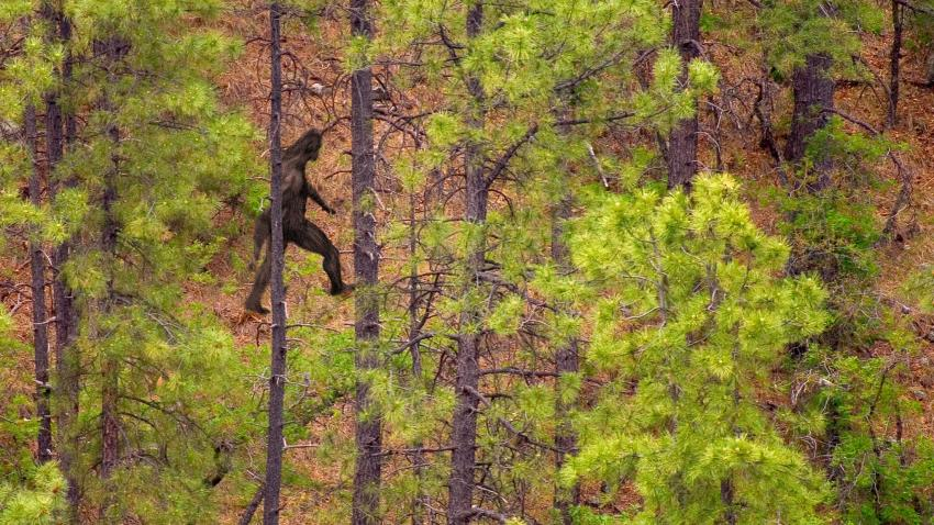 Mormon Myths: The secret history of Bigfoot